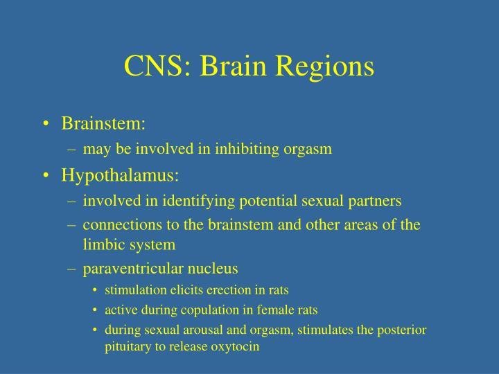 The B. reccomend Sympathetic nervous system orgasm