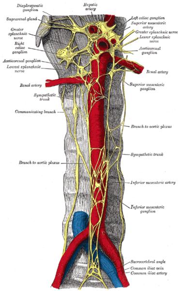 best of Nervous orgasm Sympathetic system