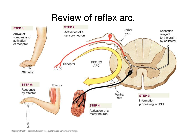 Sympathetic nervous system orgasm